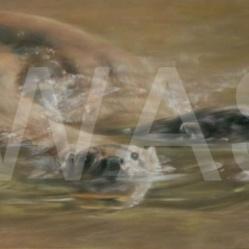 'Fluidity' by Vivien Walters Pastel/Pastel Pencil Unframed 50 x 24 £975
