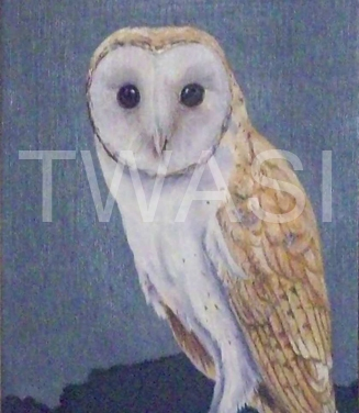 'Barn Owl' by Christopher Colley Oil on Canvas Framed 26.7 x 66.6 £285