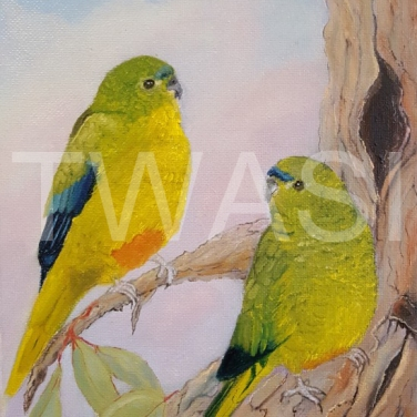 'Going?' Orange Bellied Parrott by Dave Wettner Oil on Canvas 30 x 20 £125