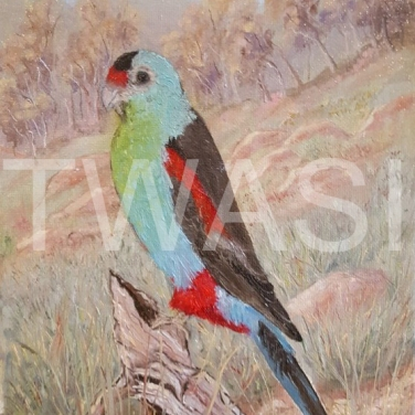 'Gone!' Paradise Parrot by Dave Wettner Oil on canvas 30 x 20 £125