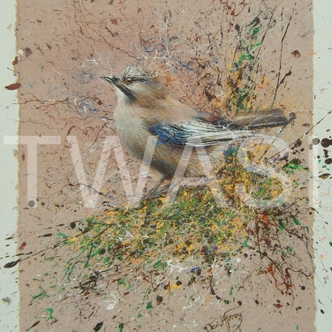 'Jay' by David A Finney Unframed Acrylics on handmade paper on deep edged canvas 40 x 50 x 04 £250