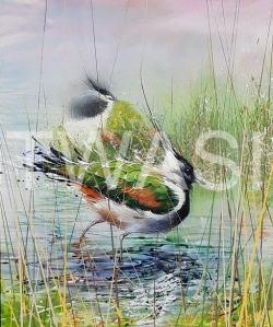 'Lapwings' (framed) by David A Finney Framed Acrylics 56 x 66 £725