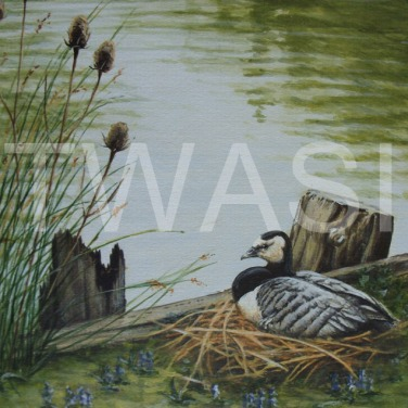 'Lakeside Nest' by Frances Sullivan Acrylic Unframed 33 x 38 £135