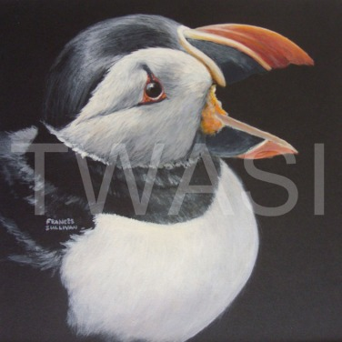 'Puffin Calling' by Frances Sullivan Acrylic Unframed 32 x 32 £95