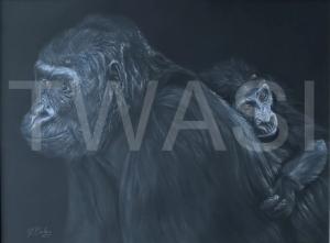 'Gorilla and Baby' by Geraldine Boley Coloured pencil & Pastel 50 x 40cm £175