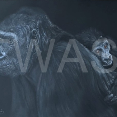 'Gorilla and Baby' by Geraldine Boley Coloured pencil & Pastel 50 x 40cm £175
