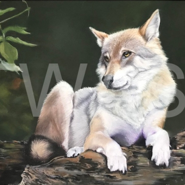 'Wolf' by Geraldine Boley Soft pastel 50 x 35 cm £175