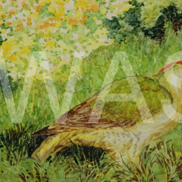 'On the Lawn' by Jackie Cox Alcohol markers Mounted 46 x 33 £175