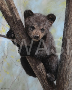 'Little Bear' by Julia Dubinina Soft Pastel on paper 40 x 50 £730 shipping included