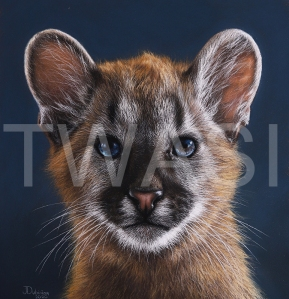 'Little Puma' by Julia Dubinina Soft Pastel on paper In frame, with museum glass 28 x 61cm (without frame), 44 x 77 (with frame) £930 shipping included