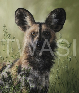 'Wild Dog' by Julia Dubinina Soft Pastel on paper 39 x 46 £810 shipping included