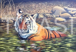 'Cooling Off' by Nick Dawe Acrylic Unframed 60 x 42 £395