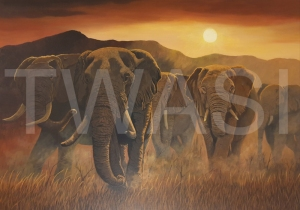'Elephants of Etsoha' by Nick Dawe Acrylic Unframed 60 x 42 £395