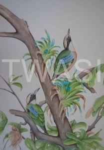 'Indian Pittas' by Paul Brainch Watercolour 76.2cm x 55.8 £400