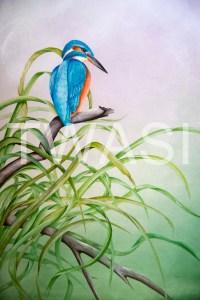 'Kingfisher' by Paul Brainch Watercolour 76.2cm x 55.8 £400