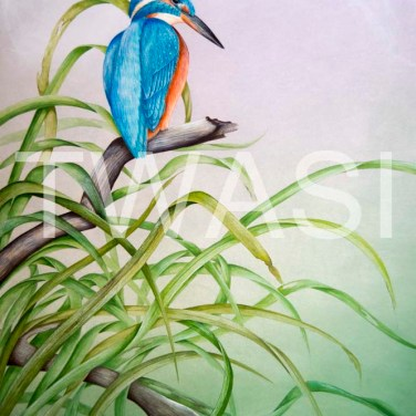 'Kingfisher' by Paul Brainch Watercolour 76.2cm x 55.8 £400