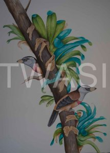 'Toucan Barbets' by Paul Brainch Watercolour 76.2cm x 55.8 £400