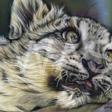 'Dreamer' by Susan Baxter Pastel Unframed 36cm x 31cm £225