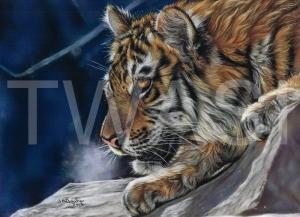 'Night Watcher' by Susan Baxter Pastel Unframed 41cm x 51cm £425