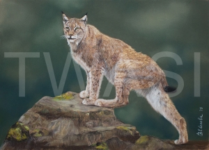 'The Lynx Study' by Vera Evseeva Soft Pastel and Pastel Pencils Unframed 30 X 40 CM £230