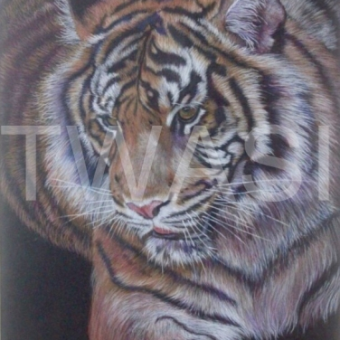 'Amur Prince' by Victoria Parsons Coloured Pencil 68 x 55 £450