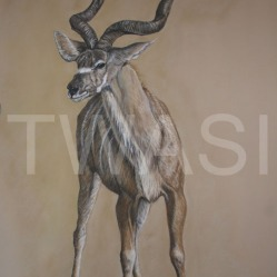 'Greater Kudu' by Yvonne Lamden Cooper Pastel and Gold Leaf Framed 84 x 57 £1,200