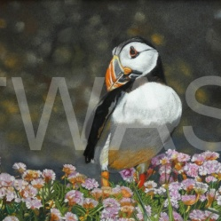 'Puffin' by Karen Markham www.artistsandillustrators.co.uk/karenmarkhamart www.facebook.com/karenmarkhamartist www.instagram.com/karenmarkhamartist
