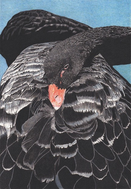 'Black Swan' by Alison Perkins