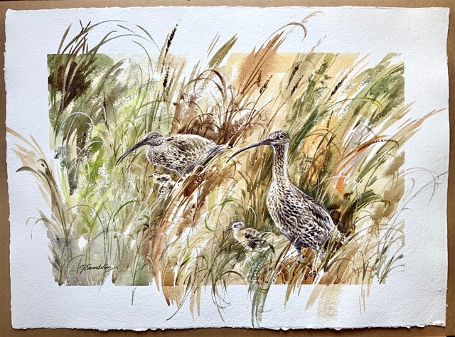 'Curlews and Young' by Chris Saunderson