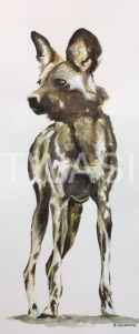 'African Painted Dog' by David Skidmore 20.5 x 51cm Watercolour on 300gsm NOT watercolour paper £325