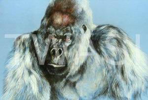 'Gorilla' by Geoff Jennings Pastel Pencil Framed 59 x 69 £600