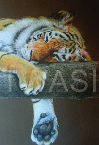 'Let Sleeping Tiger Lie' by Geoff Jennings Pastel Pencil Framed 77 x 57 £600