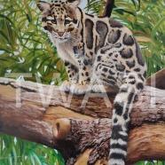 Stephen Jamison - Wild Cat sjamison53@btinternet.com