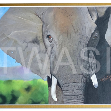 'Gentle Giant' by Rosana Venturnin Size in cms with frame/unframed: 19X24 CM – UNFRAMED 27X32.5 CM – WITH MATBOARD COLORED PENCILS ON PAPER £800
