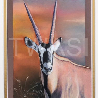 'Oryx Gazelle' by Rosana Venturini Size in cms with frame/unframed: 19X24 CM – UNFRAMED 27X32.5 CM – WITH MATBOARD COLORED PENCILS ON PAPER £800