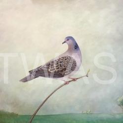 Pauline Fowler Turtle Dove