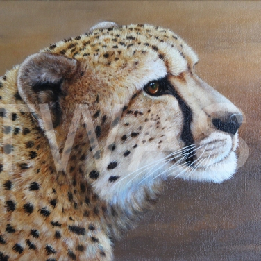 Cheetah by Anthony Webb oil framed 38 x 32 £295