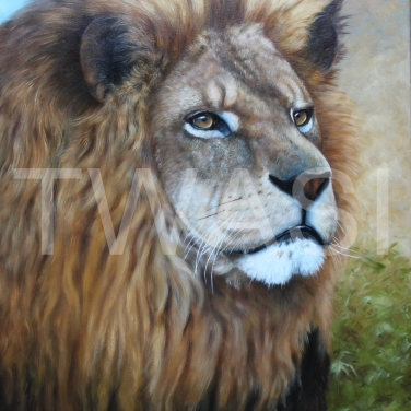 The ' mane man' by Anthony Webb oil framed 44 x 54 £495