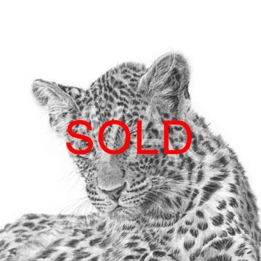 'Leopard cub 2' by David Skidmore - SOLD