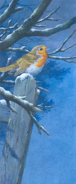 Martin Rumary-Robin in the snow