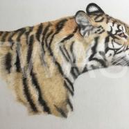 'Tiger' by Amanda Butler amanda.butler9@icloud.com
