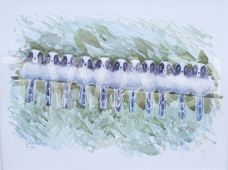 'A roost of long tailed tits' by John Horton Watercolour Framed 38 x33 cms £125