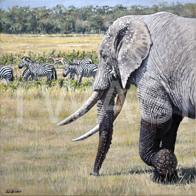 'Amboseli' by Neal Griffin Oil 6x46 cms £695