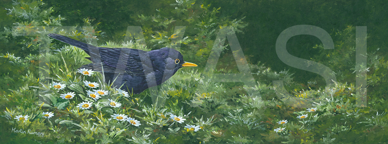 'Blackbird and Daisies' by Martin Rumary Acrylics framed 34x59 cms £360