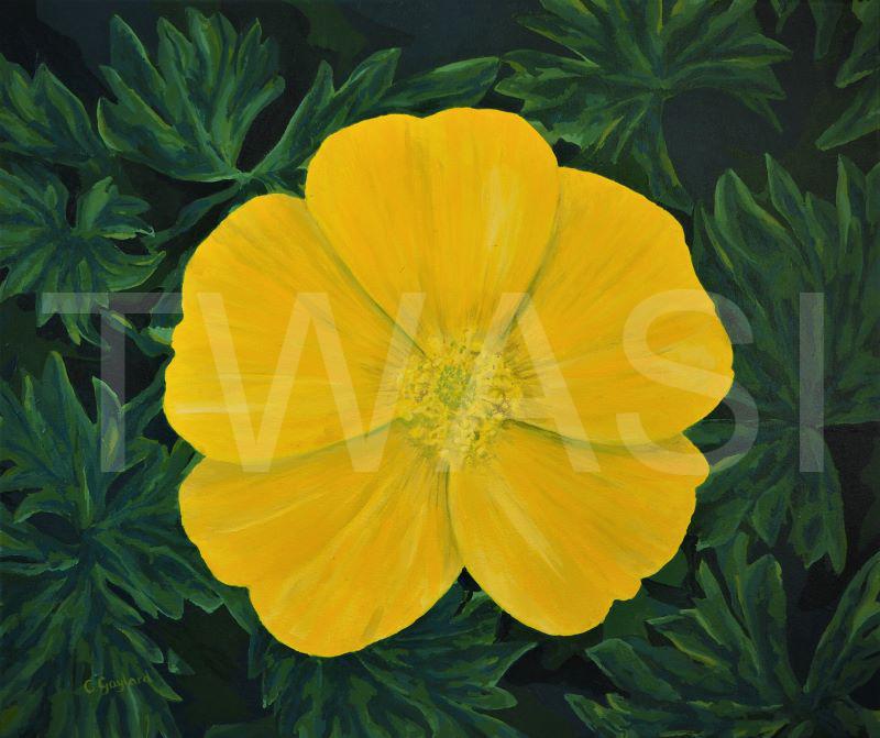 'Buttercup' by Carole H Gaylard Acrylic 60.5x51cm unframed £230
