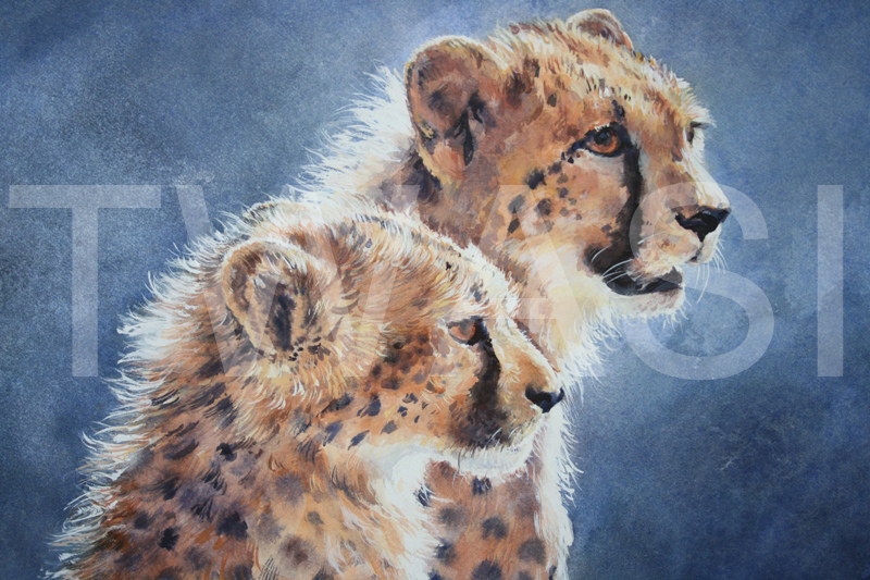 'Watch and Learn' by Carol Barrett Watercolour 40 x 53 cms £290 Carol will donate profits from the sale of this painting to the Cheetah Conservation Fund