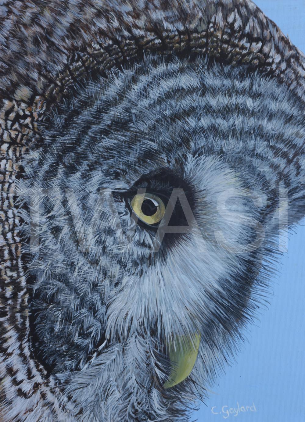 'Chloe: Great Grey' by Carole H Gaylard Owl Acrylic 43x52cm Framed £460 47x30cm mount unframed £410