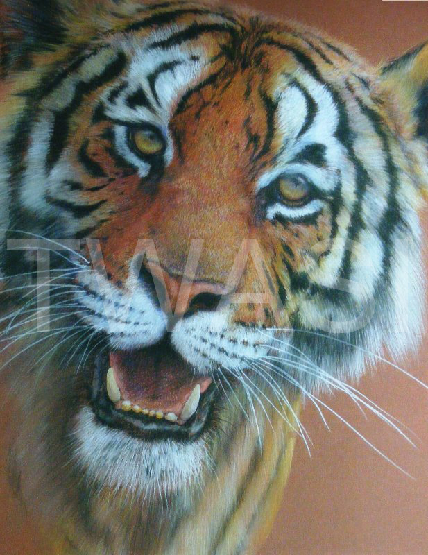 'Close Encounter' by Geoff Jennings Pastel Pencil Framed 87 x 66 cms £750