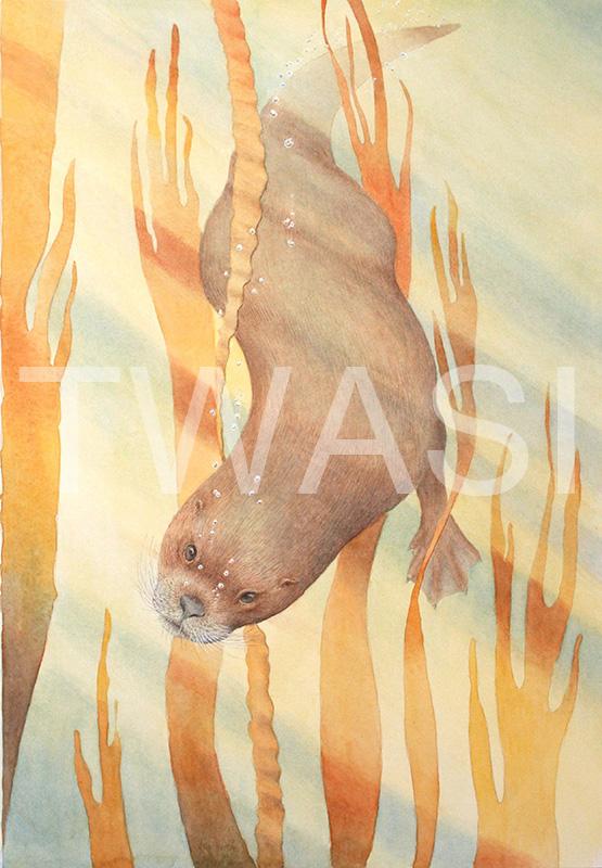 'Diving otter' by John Horton Watercolour Framed 56 x 72 cms £325