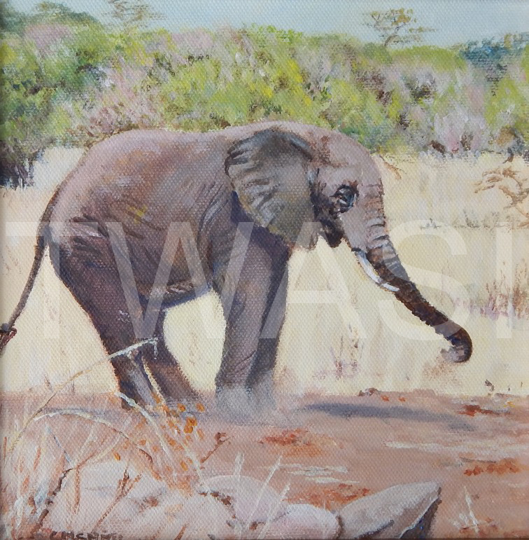 'Dust Bath' by Christine Smith Acrylic 28 x 28 cms £150